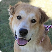 Adopt A Pet :: DIESEL - Red Bluff, CA