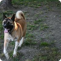 Adopt A Pet :: Spartacus - Virginia Beach, VA