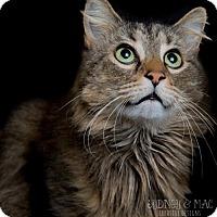 Adopt A Pet :: Rambo-URGENT - Herndon, VA