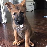 Adopt A Pet :: Deborah - Los Angeles, CA