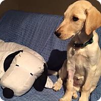 Adopt A Pet :: Oakley - Memphis, TN