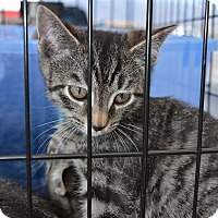 Adopt A Pet :: Bunnie - Ogden, UT