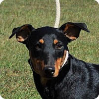 Adopt A Pet :: **QUILLIE** MEET NOV 19TH! - Mukwonago, WI