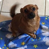 Adopt A Pet :: Mamma Chi - Matawan, NJ