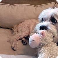 Adopt A Pet :: Rupert - Allentown, PA