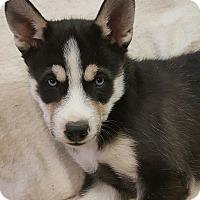 Adopt A Pet :: Donovan - Apple valley, CA