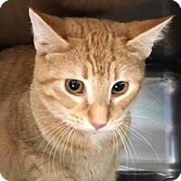 Adopt A Pet :: Rocket - Wilmington, OH