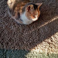 Adopt A Pet :: Mopsy - Covington, PA