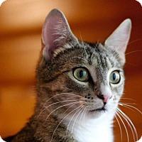 Adopt A Pet :: Reinforcement - Edmonton, AB
