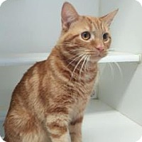 Adopt A Pet :: Tweed - Reisterstown, MD