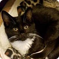 Adopt A Pet :: Riley - Mebane, NC