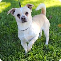 Adopt A Pet :: Huey - San Diego, CA