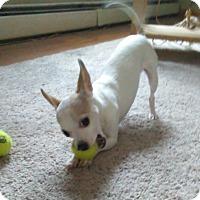 Adopt A Pet :: KNICKSY!! - Mastic Beach, NY