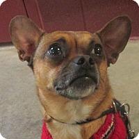 Adopt A Pet :: Riggs - LaGrange, KY