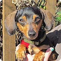 Adopt A Pet :: MILO - Portland, OR