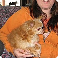 Adopt A Pet :: Chico - Greenville, RI
