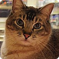 Adopt A Pet :: Rockwell - Foothill Ranch, CA