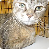 Adopt A Pet :: Latte - Medina, OH