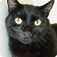 Adopt A Pet :: Mr. B - Madison, AL