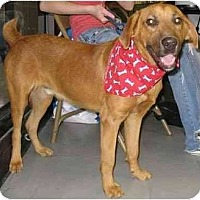 Shepherd (Unknown Type) Mix Dog for adoption in Havana, Florida - Rook