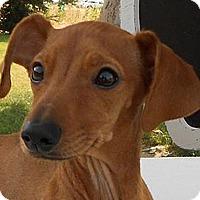 Adopt A Pet :: Mowgli - Bellflower, CA