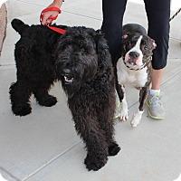 Adopt A Pet :: Noodle - Atlanta, GA