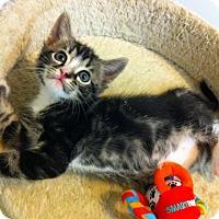 Adopt A Pet :: Mac - Watkinsville, GA