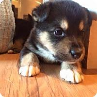 Adopt A Pet :: HARVIE - Saskatoon, SK