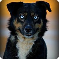 Adopt A Pet :: Spooks - Dixon, KY