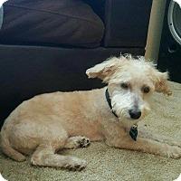 Adopt A Pet :: Neptune - Las Vegas, NV