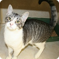 Adopt A Pet :: Sugar - Salisbury, NC