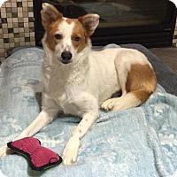 Adopt A Pet :: Harmony - Salt Lake City, UT