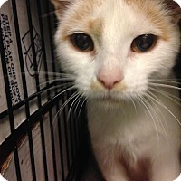 Adopt A Pet :: Shelby - East Brunswick, NJ