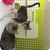 Adopt A Pet :: Josephine - San Antonio, TX