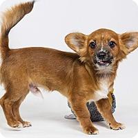 Adopt A Pet :: Athens - Yelm, WA