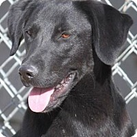 Adopt A Pet :: Rickie Wilis - Jewett City, CT