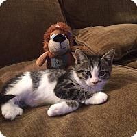 Adopt A Pet :: Virgo - Lodi, CA