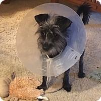 Adopt A Pet :: Rupert - San Antonio, TX