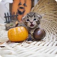 Adopt A Pet :: Mr. Big - Sterling, KS