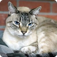 Adopt A Pet :: Tsunami - Tucson, AZ