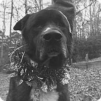 Adopt A Pet :: BRONSON - Powder Springs, GA