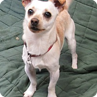 Adopt A Pet :: Jack Frost - Sonoma, CA
