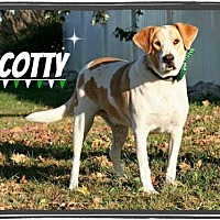 Hound (Unknown Type)/Labrador Retriever Mix Dog for adoption in Marion, Kentucky - Scotty
