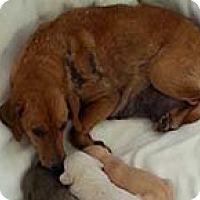 Adopt A Pet :: Donna - Chantilly, VA