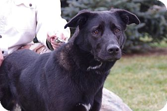 Labrador Retriever Mix Dog for adoption in Elyria, Ohio - Lexi-Prison Dog