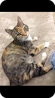 Calico Cat for adoption in Aiken, South Carolina - Hope