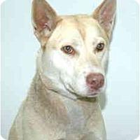Adopt A Pet :: Venus - Port Washington, NY