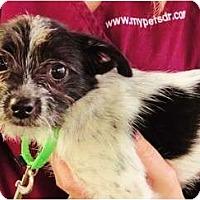 Adopt A Pet :: Jenny - Mission Viejo, CA