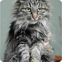 Adopt A Pet :: Sarasota - Columbus, OH