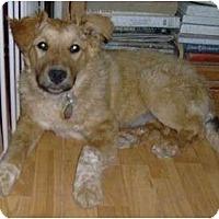 Adopt A Pet :: Hope - Golden Valley, AZ